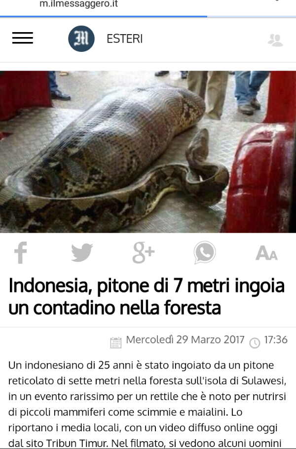 SPUNTINO D'INDONESIA